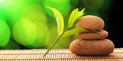 zen stone and green leaf showing wellness concept