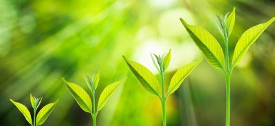 Small tree growing on a blurred fresh green nature background