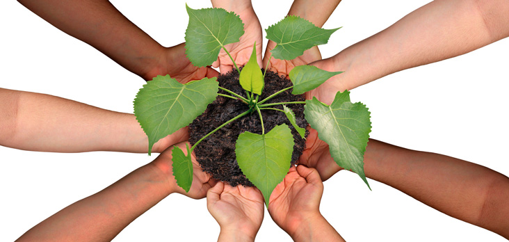 diverse group of hands cupping a plant in a mound of fresh soil