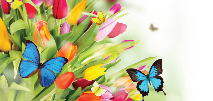 colourful tulips and butterflies