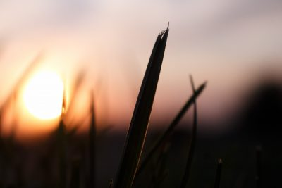 Sunset soaking blade of grass